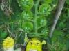 orto-di-mira-omino-verde